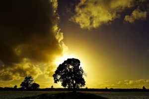 August Shadow Tree W Rahmatalla