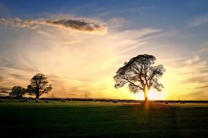 Compton-Dando-Sunset-©Wayil-Rahmatalla