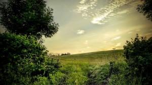 June Field Gate Bathford Hill